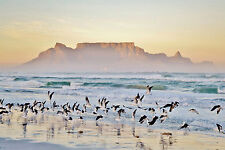 BEAUTIFUL TABLE MOUNTAIN CANVAS PICTURE #44 STUNNING LANDSCAPE DECOR A1 CANVAS