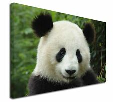 More details for face of a giant panda bear x-large 30