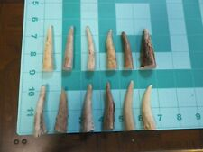 12 Shed White-tail Deer Antler Tips Craft Jewelry Pen Turning DT23