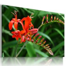 RED ORANGE FLOWERS  Abstract Modern Canvas Wall Art Picture  L501 X MATAGA