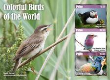 Palau 2018 Birds I201803