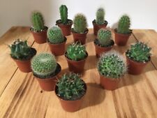 """9 Pack of Assorted Cactus in 2"""" Pot - Favors Gift, Garden, Wedding Free Shipping"""