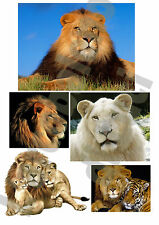 5 ADESIVI LEONE FINESTRA WINDOW STICKERS VETRI LEONI LIONS FELINI WINDOWS