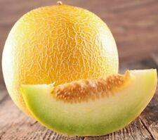Seeds Melon Sweet Honeydew Titovka Yellow Vegetable Organic Heirloom Ukraine