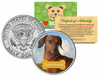 DACHSHUND * Dog * JFK Kennedy Half Dollar U.S. Colorized Coin *Limited Edition*