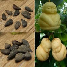 20pcs Special Rare Baby Ginseng Fruit Seeds Pear Tree Seeds Sapodilla Garden TR