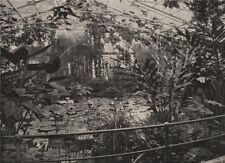 Water-Lily House, Kew Gardens. London 1896 old antique vintage print picture