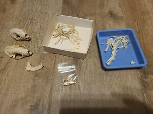 Two Small Animal Skulls And Miscellaneous Bones Teeth Jaws Ribs Snake And More