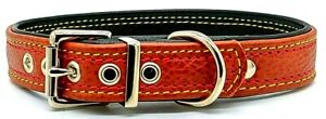 Tan on dark Green leather dog collar with Yellow and Red stitching