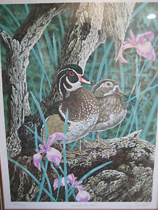 CRIS FOREST WOOD DUCKS LITHOGRAPH, LIMITED EDITION, 224/300, W/WOODEN FRAME