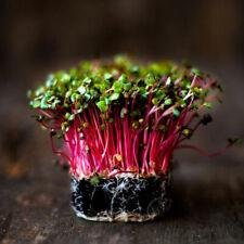 10 grams Radish sprouts seeds, natural green food vegetable Seedling
