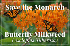 Butterfly Milkweed  VERY SHOWY NATIVE PERENNIAL LONG BLOOM PERIOD COMB/SHIPPING