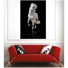Affiche poster cheval blanc 68632957 Art déco Stickers