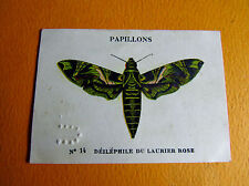 CHROMO 1939 CASINO N°14 PAPILLON BUTTERFLY DELEPHILE DU LAURIER ROSE
