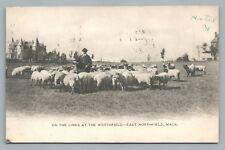 """""""On The Links"""" East Northfield MA Antique Golf Course Sheppard UDB Franklin Co"""