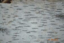 "Birch Bark for Furniture ,Crafts, Decor Pristine Bark two sheets 12"" x 16"""