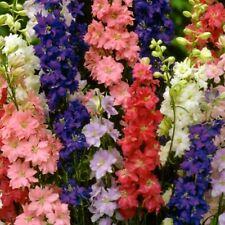 Sommer Rittersporn Mix Blume Beete Pflanze 150 Samen Nr.319