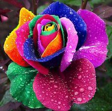 10x Regenbogen Rosensamen Rosen Saatgut Blumen Blumensamen Pflanzensamen 53*