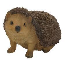 Vivid Arts - REAL LIFE WOODLAND ANIMALS - Hedgehog