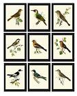 Unframed Bird Prints Set of 9 Antique Pretty Birds Home Decor Wall Art