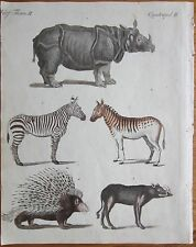 Bertuch: Handcolored Print Animals Rhinoceros Zebra Porcupine - 1799*