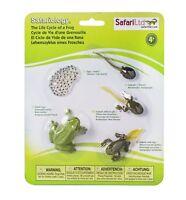 Life Cycle Of A Frog Figures, Models ~ Safari Ltd 269129