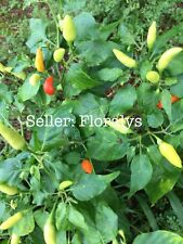 Vine-Dried Organic GUAM Boonie Pepper Seeds * HOT Donne Peppers