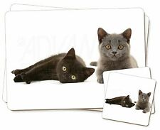 Black+Blue Kittens Twin 2x Placemats+2x Coasters Set in Gift Box, AC-126PC