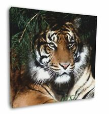 """Bengal Tiger in Sunshade 12""""x12"""" Wall Art Canvas Decor, Picture Print, AT-10-C12"""