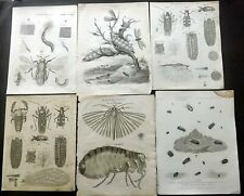 Insects C1800-20s Lot of 8 Antique Prints. Encyclopedia Plates