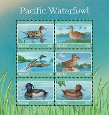 Palau 2018   fauna  Pacific  waterfowl 201901