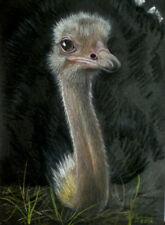 Original Pastel Drawing Ostrich Wild Bird Australia Sally Porter Wildlife Art