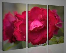 Quadri moderni Particular Rose rosa fiori stampe su tela canvas 130 x 90