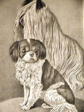 Jean Bungartz Yorkshire Terrier & Japanese Chin Hound 1890 Antique Print Matted
