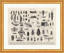 Küchenschabe Termiten Libelle Speckkäfer Brockhaus Bilder Atlas Zoologie 25