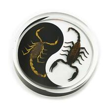 Real Insect Scorpion Ying Yang Desk Top Paperweight