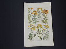 Sir John Hill, Botanical, The Vegetable System 1761-1775 Groundsel #09