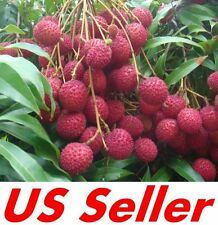 10 PCS Lychee Lychy Litchi Seeds E14, Tasty Rare Fruit Tree Seed, US Seller
