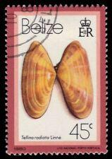 "BELIZE 481 (SG542) - Sunrise Tellin Shell ""Tellina radiata"" (pa72632)"