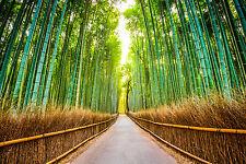 STUNNING JAPANESE GARDEN BAMBOO ZEN CANVAS #388 WALL HANGING PICTURE ART A1