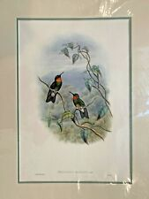Original Hand Colored Lithograph Hummingbirds Gould Ecaudorian Star-Frontlet