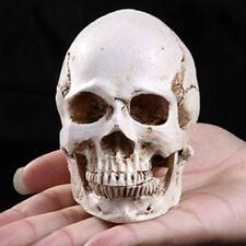 White Resin Simulation Replica Realistic Human Skull Gothic Halloween Decor #Hf0