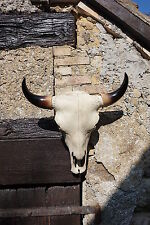 IN0257  TETE DE MORT SQUELETTE FIGURINE CRANE BISON     FANTASY VACHE