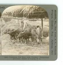 Wsa9750 Keystone 10068 Threshing Out Rice Pangasinan Province Philippines D