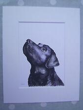"Watercolour black labrador, dog, Print of original painting, in 10"" x 8"" Mount"