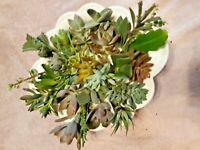 """15 Assorted Succulent Cuttings 15 Varieties 3"""" - 4"""" + 2 Free"""