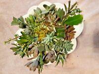 "15 Assorted Succulent Cuttings 15 Varieties 3"" - 4"" + BONUS 2 FREE"