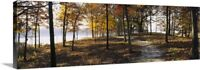 Trees in a forest, Sleeping Bear Dunes Canvas Wall Art Print, Forest Home Decor