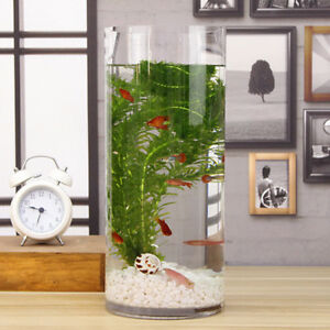 Betta   Bowl Goldfish Round Clear Glass Tank with Sand Artificial Grass