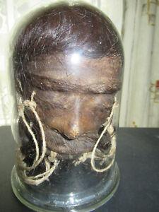 Schrumpfkopf,Tsantsa,Shrunken Head,unter Glasdom,Schädlingsbefall,defekt,Fund